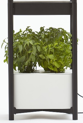 Miracle-Gro Twelve Indoor Growing System