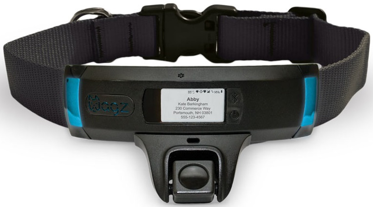 Wagz Explore Smart Collar