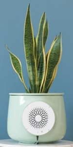 Natede Air Purifier and Plant from Clairy